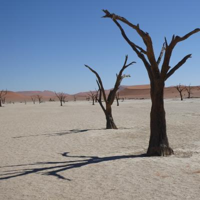 Desertification, Namibia